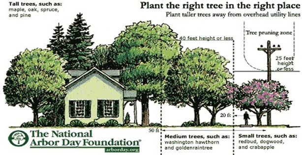 Image showing where to safely plant trees near your home